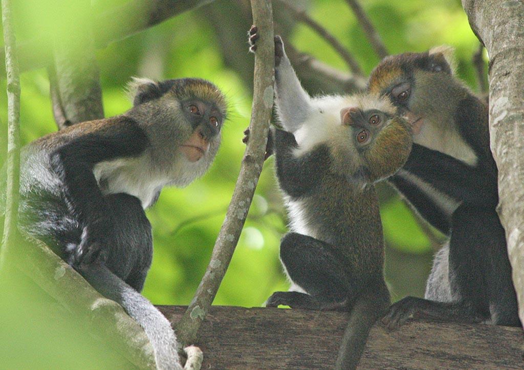 eco-monkey